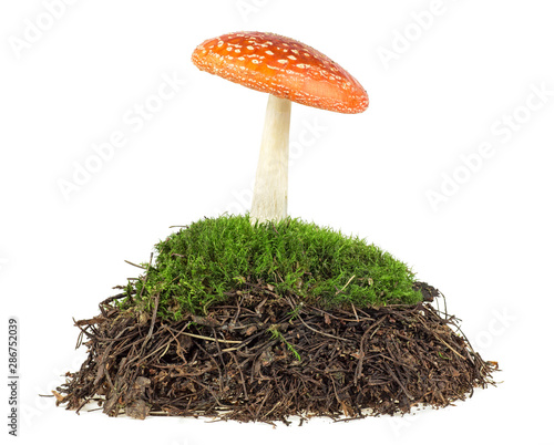 Fotografie, Tablou  Fly agaric mushroom in moss isolated on a white background