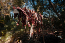 Drying Bush Meat From A Hunted Sitatunga