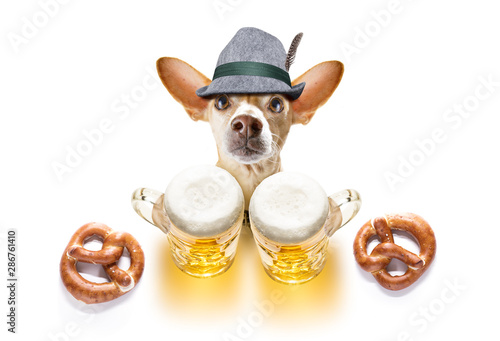 Canvas Prints Crazy dog bavarian beer chihuahua dog