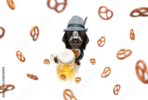 Foto op Canvas Crazy dog bavarian beer dachshund sausage dog
