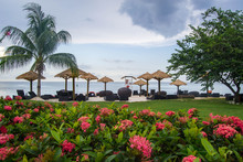 Star Cluster Flowers Decorating Beach Lawn