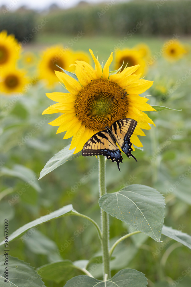 Bugs, Bees, and a Sunflower