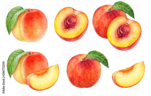 Fotografija Peach fruit watercolor isolated on white background