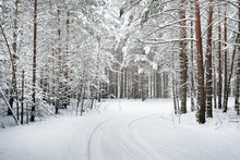 Path In A Winter Forest Under Thick Layer Of Snow In Latvia