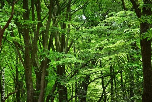 Fotobehang Bamboo Spring forest in the Netherlands