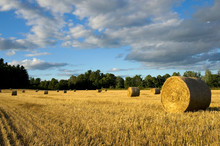 Freshly Cut Field Of Yellow Straw With Beautiful Large Bale In The Foreground
