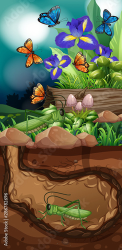 Nature scene with grasshopper and butterfly