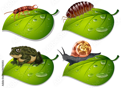 Tuinposter Kids Four types of insects on green leaves