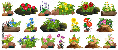 Montage in der Fensternische Kinder Large set of colorful flowers on rocks and wood