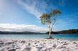 Leinwanddruck Bild - Tree with blue water and white sand at lake McKenzie Fraser Island Queensland australia