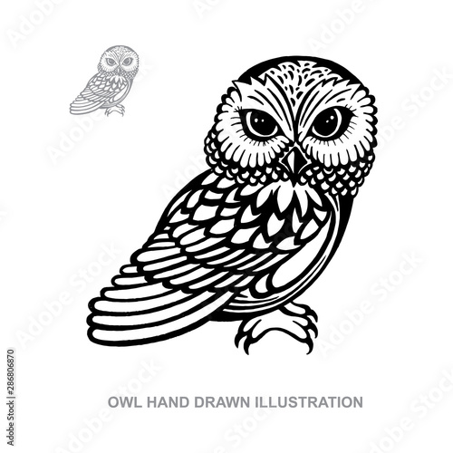 Owl. Owl hand drawn vector illustration. Owl sketch drawing. Part of set.