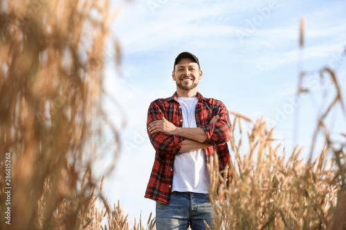 Fototapeta Farmer in field on sunny day obraz