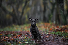 Black Mixed Breed Dog Outdoors In Autumn