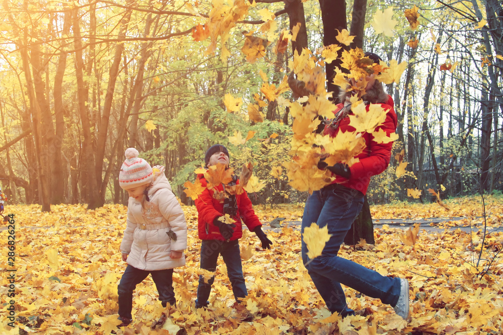 Fototapety, obrazy: happy family walking in sunny park and throws orange maple leaves. mother with kids enjoying autumn weather outdoors