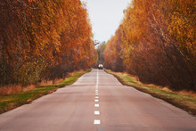 The Road In The Autumn Landscape. Yellow Bright Trees And A Deserted Road.