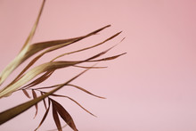 Tropical Dry Leaves On Pink Ba...