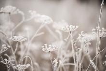 Dried Flowers In A Meadow In W...