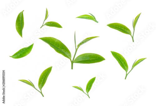 obraz lub plakat green tea leaf isolated on white background