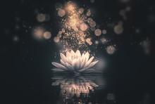 Lotus Reflection Gold Lighting Dark Background