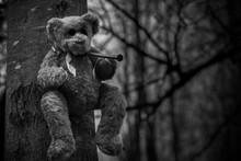 Teddy Bear Nailed To A Tree