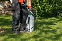 Spraying Pesticide With Portab...
