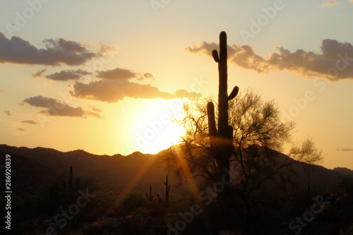 Poster de jardin Desert de sable Arizona Sunset