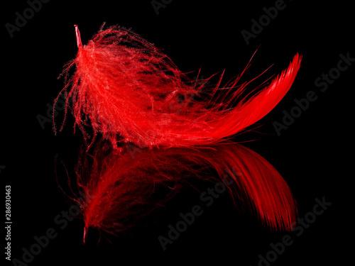 czerwone-pioro-na-czarnym-tle
