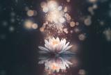 Fototapeta Kwiaty - abstract background with lotus flowers