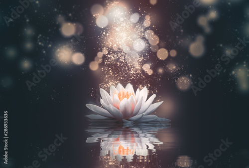 Poster Waterlelies abstract background with lotus flowers