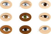 Set Of Realistic Racially Diverse Vector Illustrations Of Human Eyes, Male And Female, EPS 8, No Transparencies
