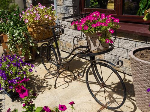 Foto op Plexiglas Fiets An iron decorative bike stands with beautiful flowers in pots. Rosa Khutor