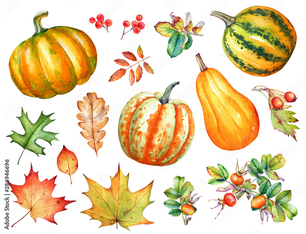 Obraz Watercolor autumn leaves, berries and pumpkins on white background. fototapeta, plakat
