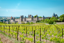 Vineyard In Front Of The City Walls Of Carcasonne