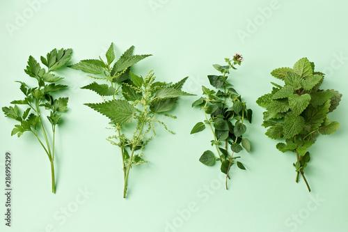 Photo  Fresh herbs on pastel background