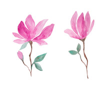 Pink Magnolia Flowers Watercolor Painting Set - Hand Drawn Blossom Isolated On White Background