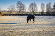 Pferd auf frostiger Wiese