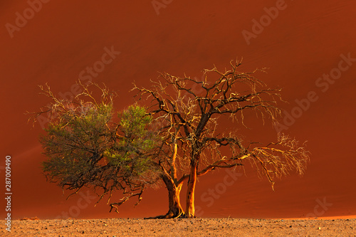Deadvlei, orange dune with old acacia tree Wallpaper Mural