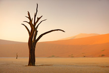 Deadvlei, Orange Dune With Old...