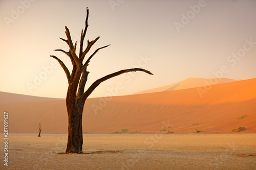 deadvlei-orange-dune-with-old-acacia-tree-african-landscape-from-sossusvlei-namib-desert-namibia-southern-africa-red-sand-biggest-dun-in-the-world-travelling-in-namibia-sunrise-first-light