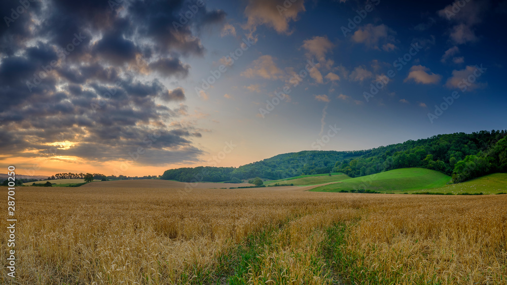 Fototapety, obrazy: Summer sunrise on the South Downs near Didling, West Sussex.