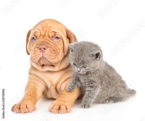 Fototapeta Baby kitten sitting with mastiff puppy. isolated on white background obraz na płótnie