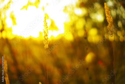 Tuinposter Wijngaard grass in the sun