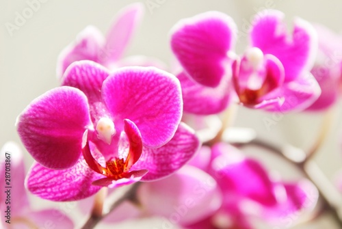 Tuinposter Orchidee pink orchid flowers, fuchsia,