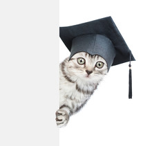 Surprised Cat With Black Graduation Cap Behind Empty White Board. Isolated On White Background