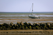 The Wadden Sea, With Its Fasci...