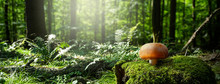 Mushroom In A Green Forest With Autumn Sun