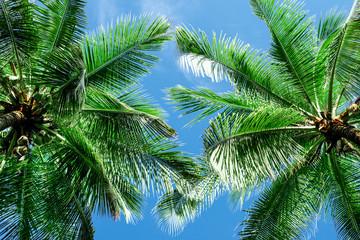 Obraz na Szkle Liście Green palm tree against blue sky and white clouds
