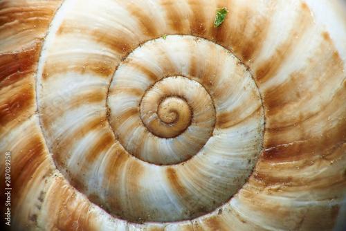 Cuadros en Lienzo  Macro shot of a snail shell.