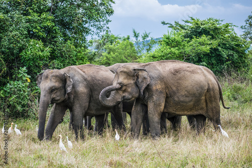 Elephant Family in Wasgamuwa National Park Wallpaper Mural