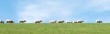 White Sheep Under Blue Sky On ...